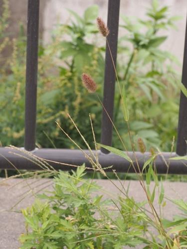 200922106murasakienokoro.jpg