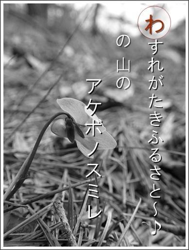 13wa160413149akebono2.jpg