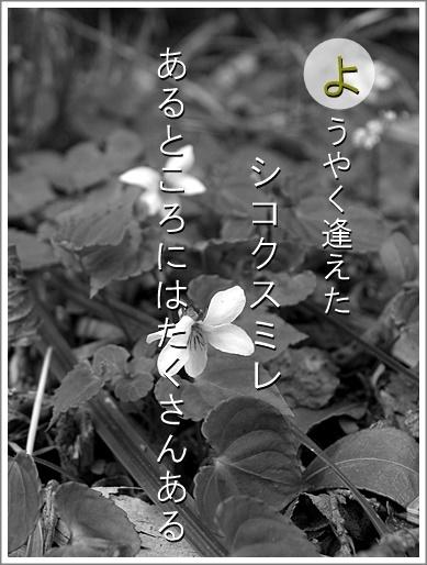 15yo100515003sikoku2.jpg