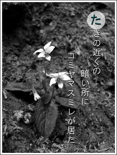 16ta110426018komiyama2.jpg
