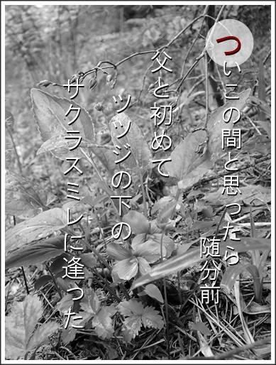 19tu160521036sakura2.jpg