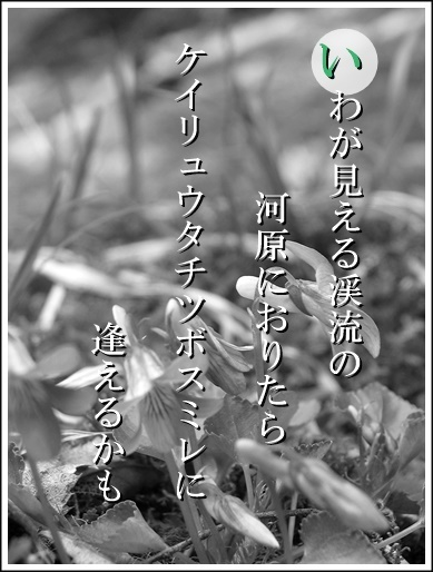 25i120419327keiryu2.jpg