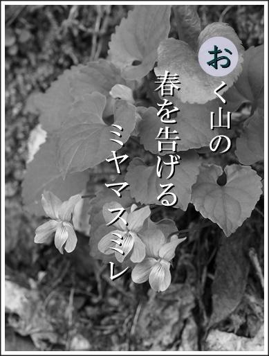 27o140529184miyama2.jpg