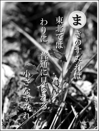 30ma140419026makino2.jpg