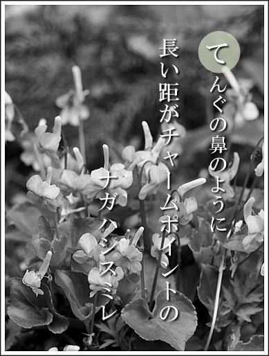 35te160420132nagahasi2.jpg