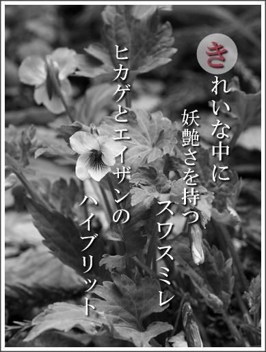 38ki140415090suwa2.jpg