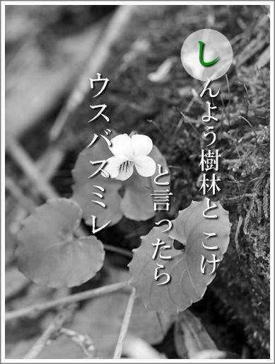 42si140626014usuba2.jpg